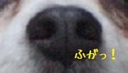 d0169340_0461225.jpg
