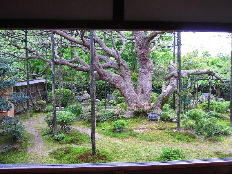 大原宝泉院の「額縁の五葉松」_e0237645_22212920.jpg