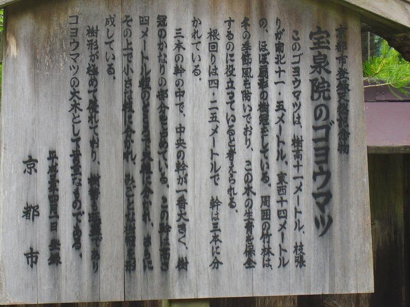 大原宝泉院の「額縁の五葉松」_e0237645_22214253.jpg