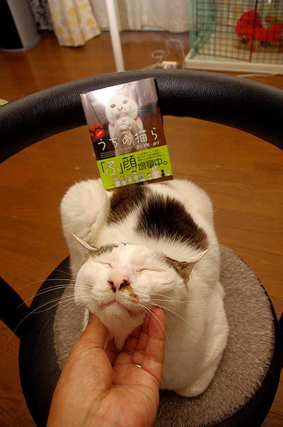文庫版うちの猫ら本日発売!_a0028451_12511897.jpg