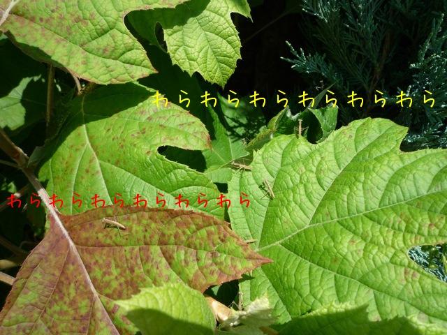 f0177261_1128284.jpg