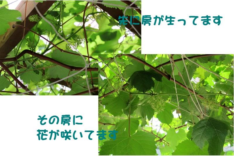f0003174_9313882.jpg