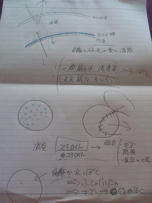 水泡性角膜症_d0003977_19172080.jpg