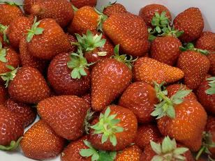 イチゴのうんちく_f0172281_9223542.jpg