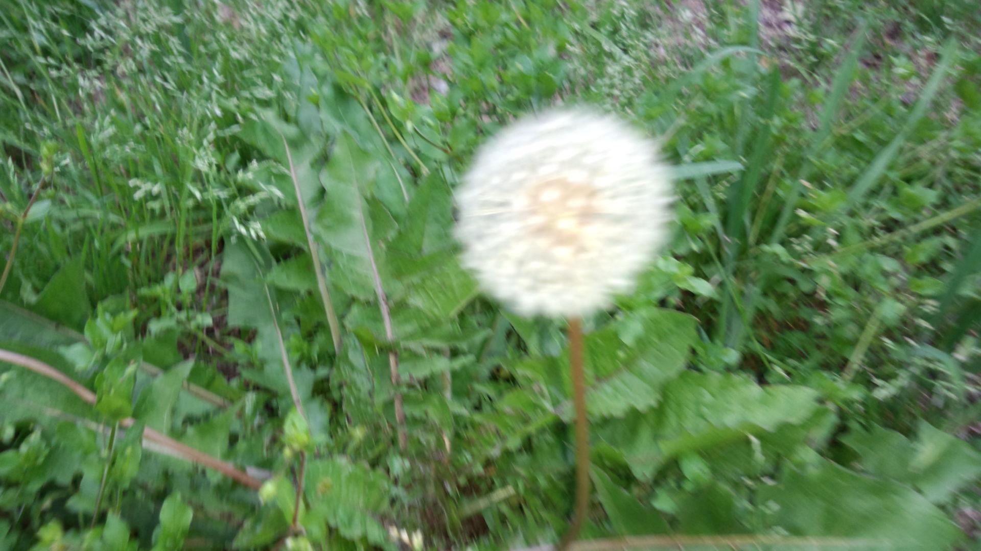 苗採り一日中です(^_^)V_d0152192_23242273.jpg