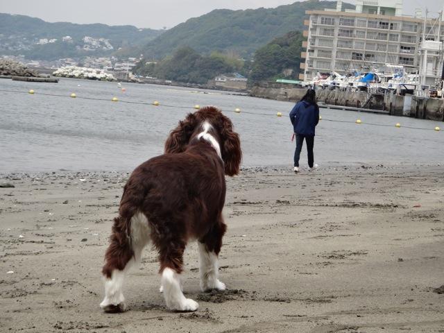 Sandy beach  /   gaga_b0195093_854717.jpg