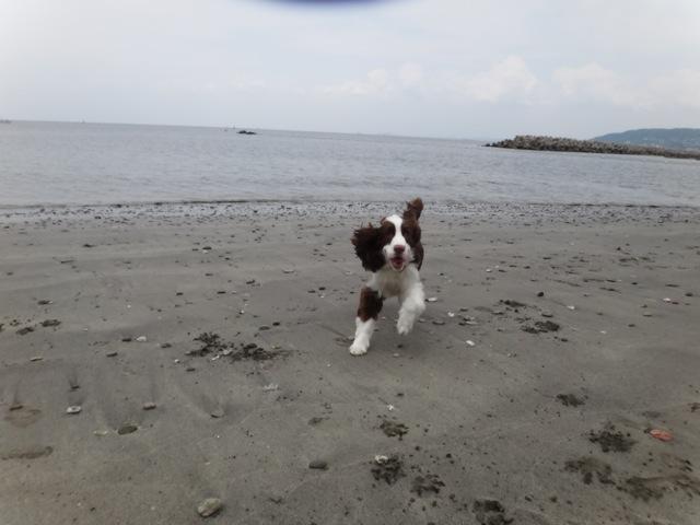 Sandy beach  /   gaga_b0195093_861432.jpg
