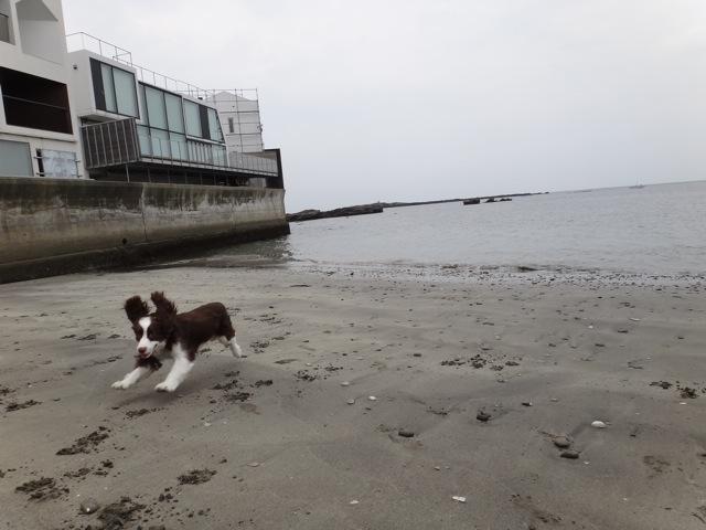 Sandy beach  /   gaga_b0195093_861718.jpg