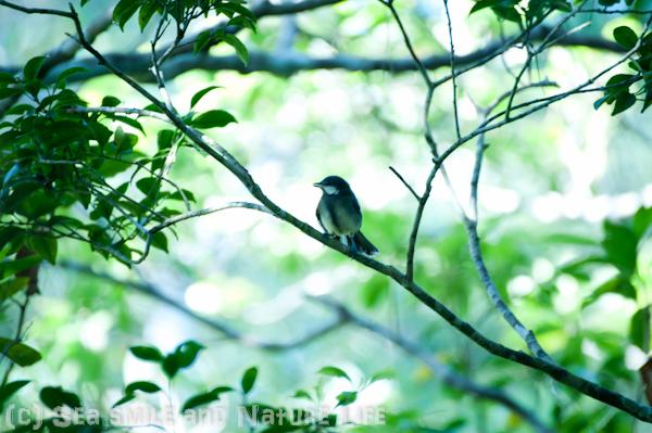 森林探索♪_a0155606_16455749.jpg