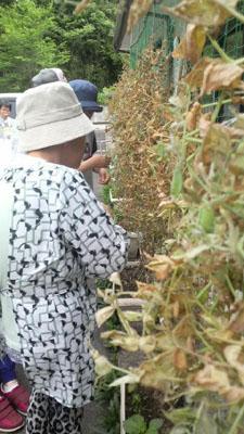 プチ収穫祭!_a0154110_1411421.jpg