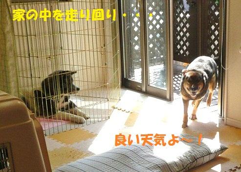 f0121712_23103244.jpg