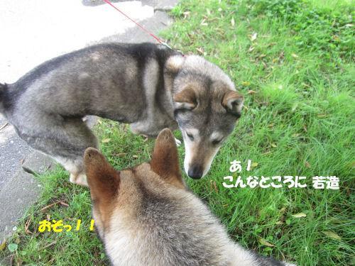 f0143123_2011245.jpg