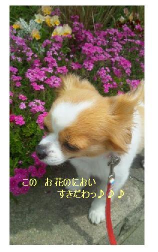 f0049124_21484151.jpg