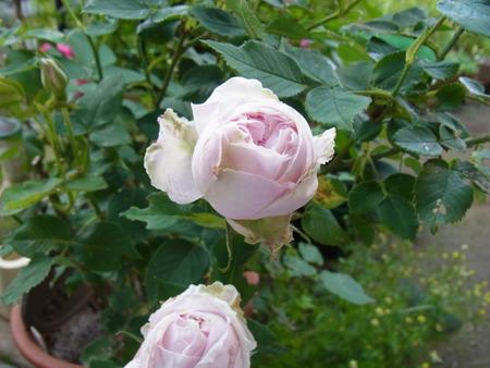 今朝の庭_a0223650_5462667.jpg