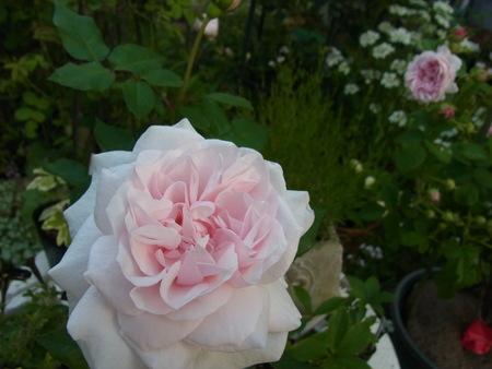 今朝の庭_a0223650_5465927.jpg