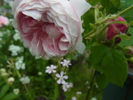 今朝の庭_a0223650_5474136.jpg