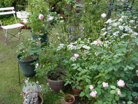 今朝の庭_a0223650_5484684.jpg