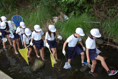 箱作小学校4年学習サポート          「田山川の水生生物観察」_c0108460_18204728.jpg