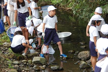 箱作小学校4年学習サポート          「田山川の水生生物観察」_c0108460_18284076.jpg