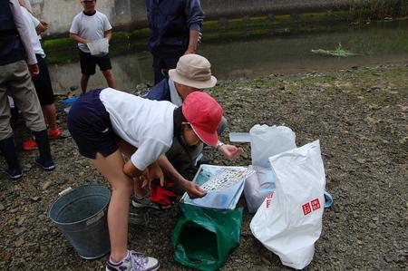 箱作小学校4年学習サポート          「田山川の水生生物観察」_c0108460_21102520.jpg