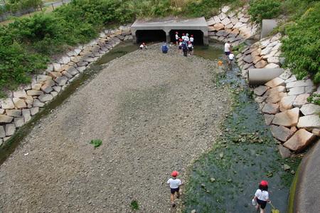 箱作小学校4年学習サポート          「田山川の水生生物観察」_c0108460_2135526.jpg