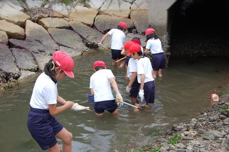 箱作小学校4年学習サポート          「田山川の水生生物観察」_c0108460_2152388.jpg