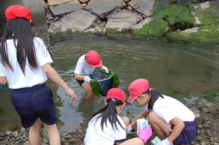 箱作小学校4年学習サポート          「田山川の水生生物観察」_c0108460_2184697.jpg