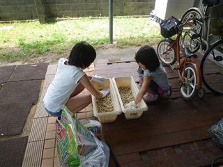 先日、子供たちと「ひまわり」のたねを植えました!_c0131666_22122387.jpg