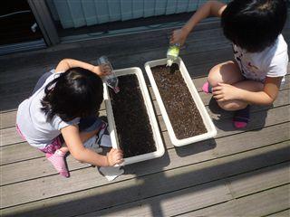 先日、子供たちと「ひまわり」のたねを植えました!_c0131666_22155496.jpg