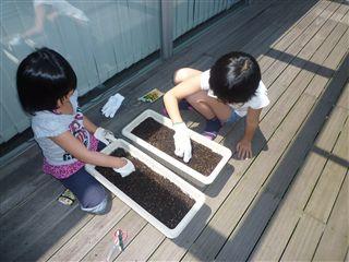先日、子供たちと「ひまわり」のたねを植えました!_c0131666_22164544.jpg