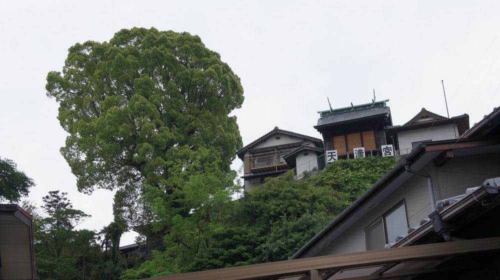 朝のお散歩_e0158970_1530572.jpg