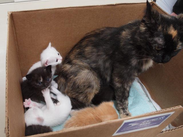 子猫の里親募集中です_e0175370_13411184.jpg