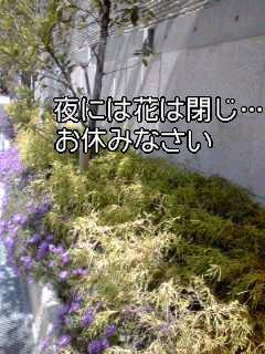 f0200871_050194.jpg