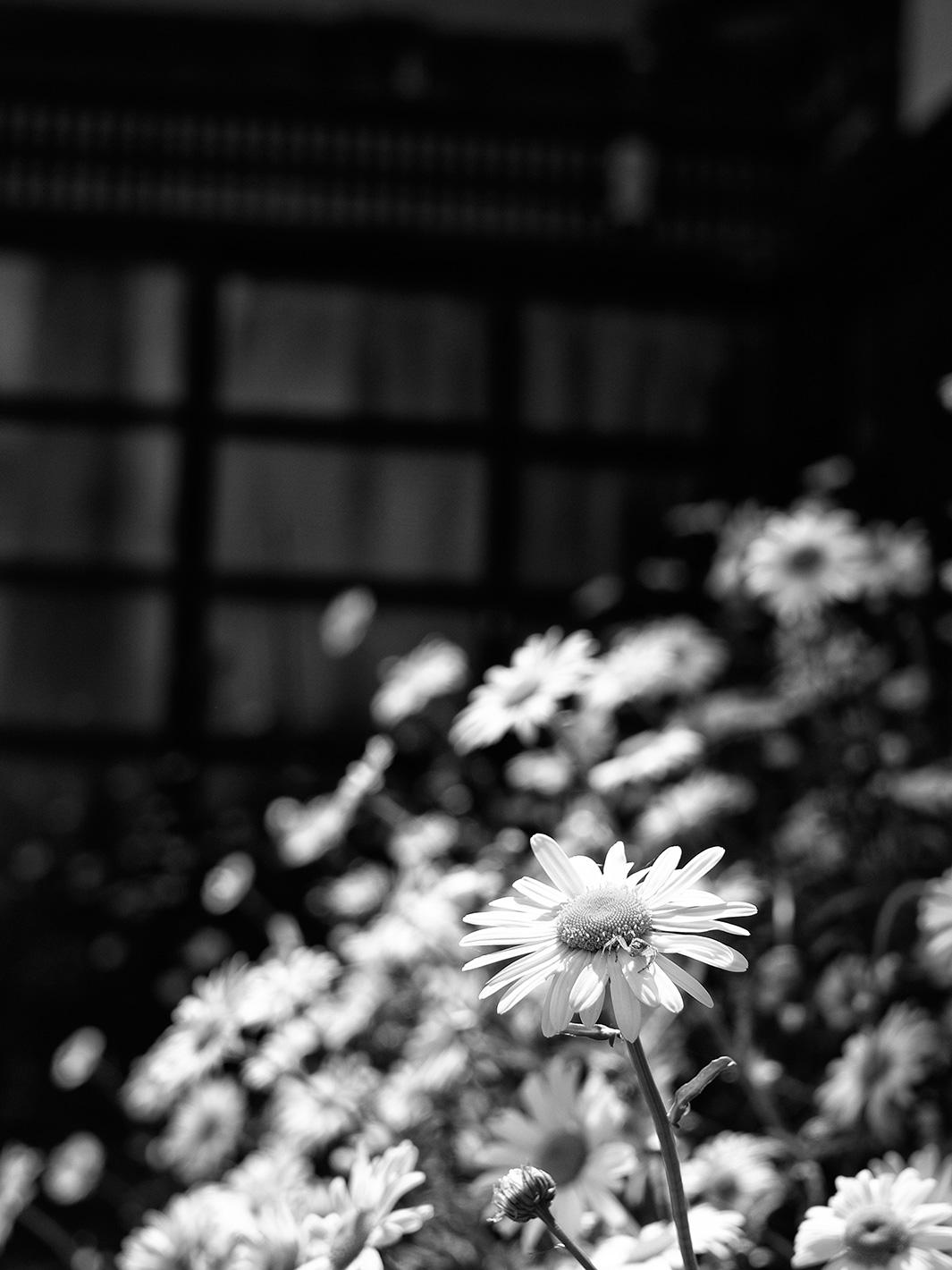 初夏日_f0121181_22372232.jpg