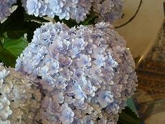 紫陽花 ♪_c0080689_1124535.jpg