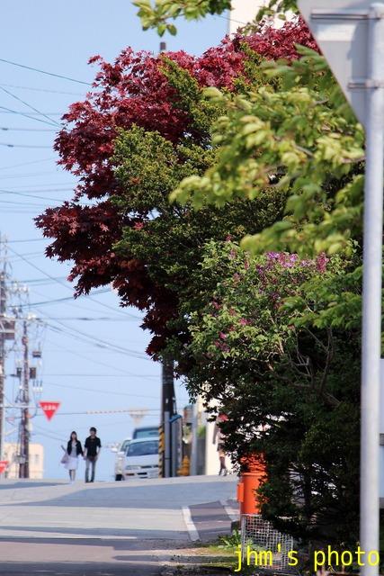 桜散る元町の散策と女神へのメッセージ_a0158797_2322196.jpg