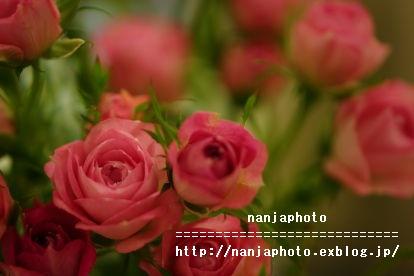 e0268999_10415429.jpg