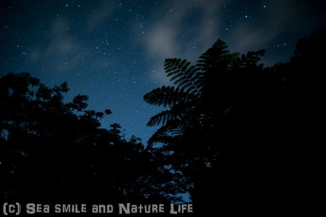 石垣島の星_a0155606_16135152.jpg