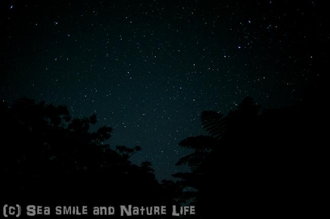 石垣島の星_a0155606_16142733.jpg