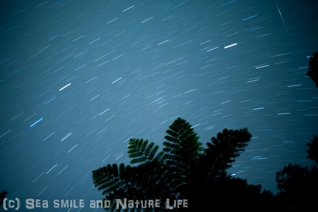 石垣島の星_a0155606_16143889.jpg