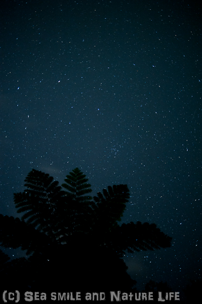 石垣島の星_a0155606_1614469.jpg