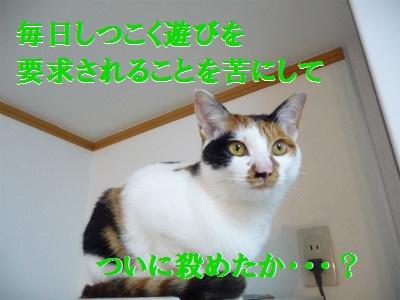 e0072606_14153710.jpg