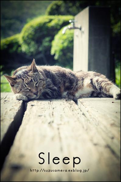 居眠り猫_f0100215_3512370.jpg