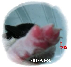 c0200916_20571853.jpg