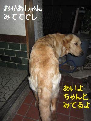 b0008217_10464364.jpg