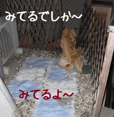 b0008217_1047399.jpg