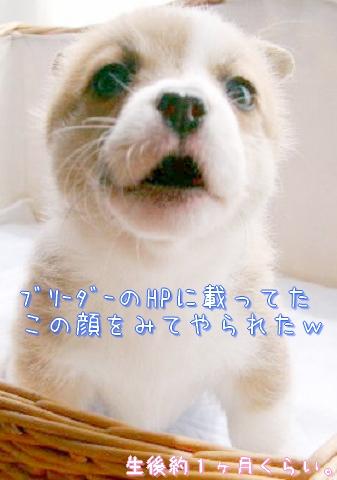 c0134720_19193074.jpg