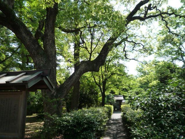 新緑の御所・拾翠亭の聞香会・貴族のお茶室へ。_f0181251_1532971.jpg