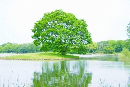 【フォトピクニックレポート】 昭和記念公園 5月20日_c0238457_14181144.jpg