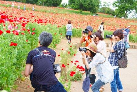 【フォトピクニックレポート】 昭和記念公園 5月20日_c0238457_15173641.jpg